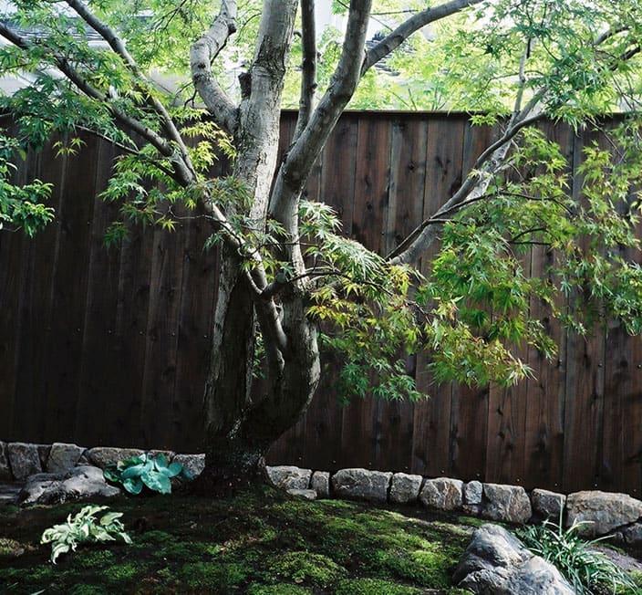 巨木の提案